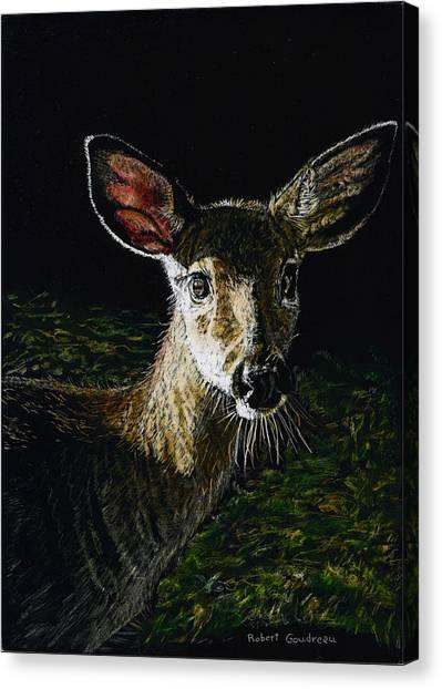 Deer Portrait Canvas Print by Robert Goudreau