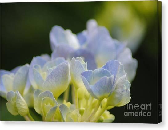 Delicate Bloom Canvas Print