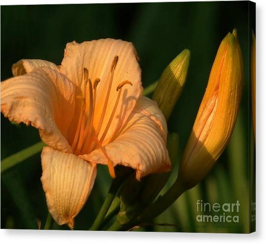 Delicate Flower Canvas Print