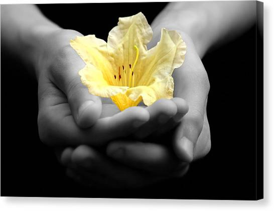 Delicate Yellow Flower In Hands Canvas Print