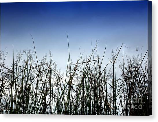 Desert Grass Canvas Print by Antoni Halim