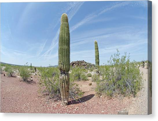 Canvas Print featuring the photograph Desert Monument by Margaret Pitcher