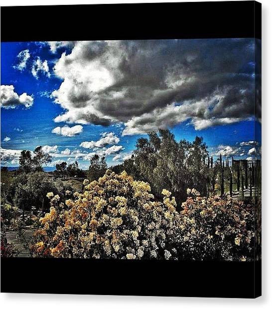 Vineyard Canvas Print - #desert #resort #paradise #flowers by Skip Jensen