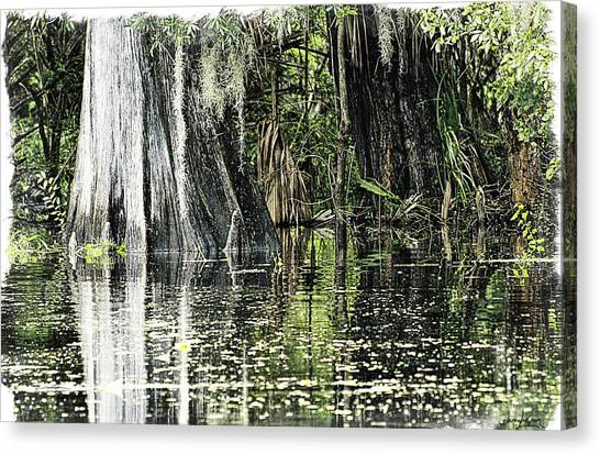 Details Of A Florida River Canvas Print