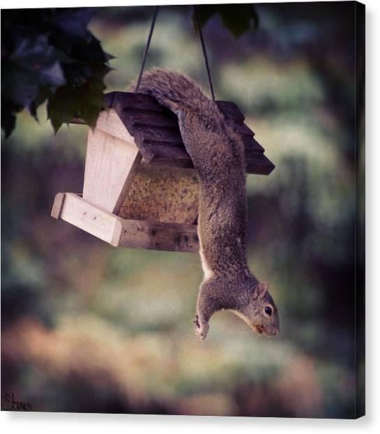 Squirrels Canvas Print - Determination by September  Stone