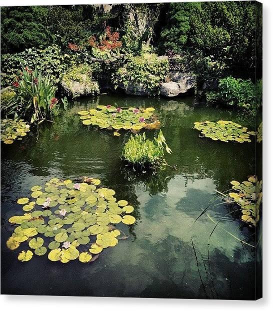 Lilies Canvas Print - #detroit #pond #belleisle #conservatory by Harvey Christian