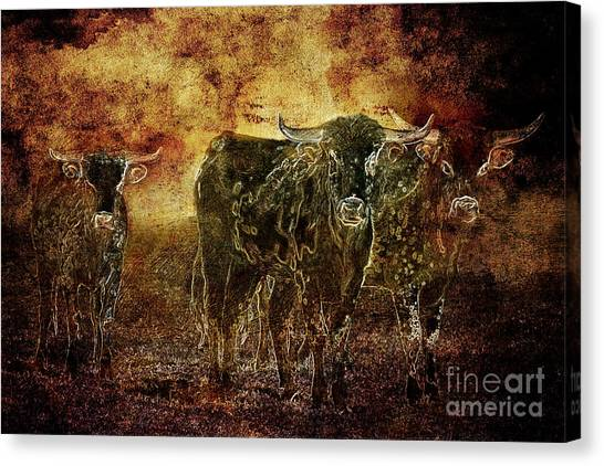 Devil's Herd - Texas Longhorn Cattle Canvas Print