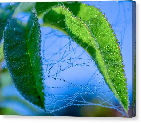 Dew Droplets Canvas Print by Brian Stevens