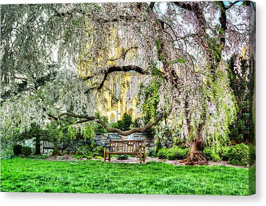 Saint Canvas Print - Digital Liquid -  Cherry Blossoms At The Washington National Cathedral by Metro DC Photography