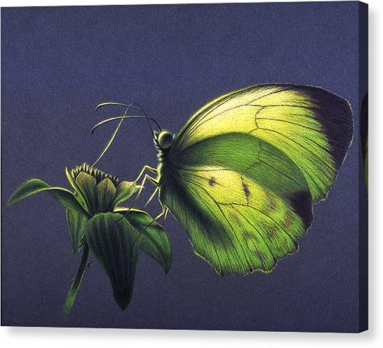 Dina Yellow Canvas Print
