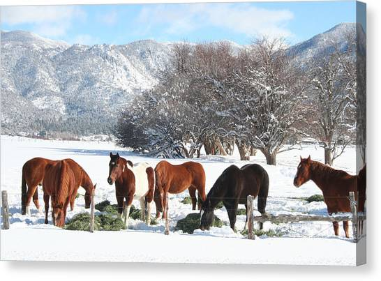 Dinner Time In The Snow Canvas Print