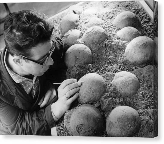 Gobi Desert Canvas Print - Dinosaur Eggs by Ria Novosti