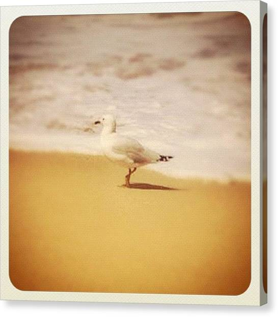 Seagulls Canvas Print - Do Not Worry! 🐦 Matthew 6:26 Look At by Wilson Aw