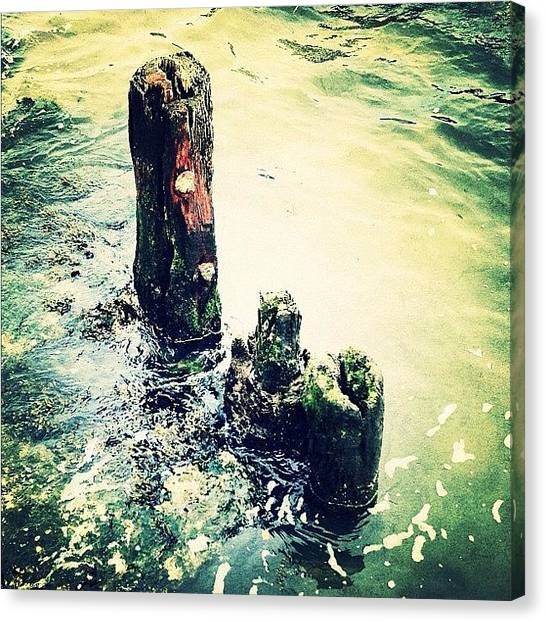 Water Canvas Print - Dock Remnant by Natasha Marco
