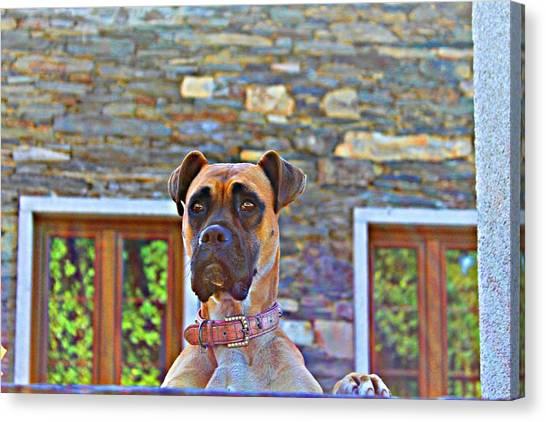 Dog Buldog Canvas Print by Jenny Senra Pampin