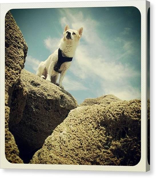 Rock Canvas Print - #dog #cute #beach #photography #ocean by Mandy Shupp