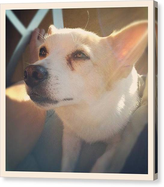 Puppies Canvas Print - #dog #cute #pet #love #sun #sunshine by Mandy Shupp