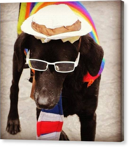 Quirky Canvas Print - Dog From Lima by Shayne Arcilla