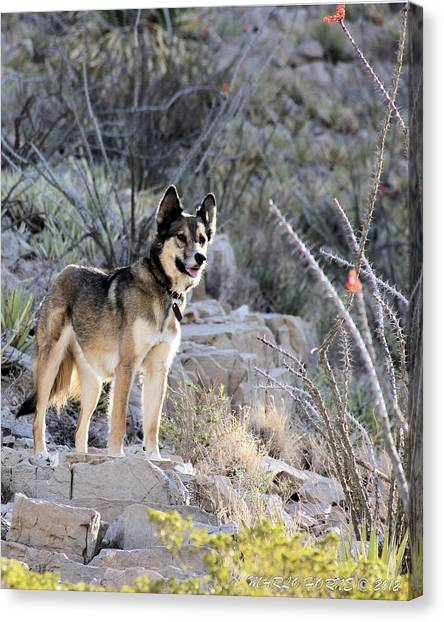 Dog In The Mountains Canvas Print