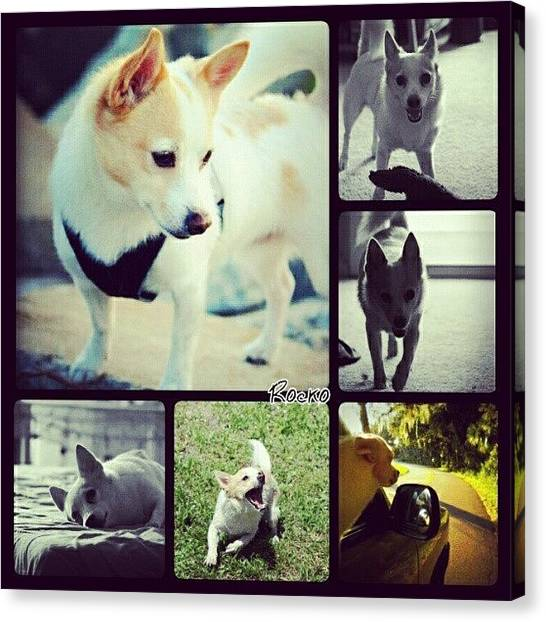 Pets Canvas Print - #dog #pet #puppy #collage #animallovers by Mandy Shupp