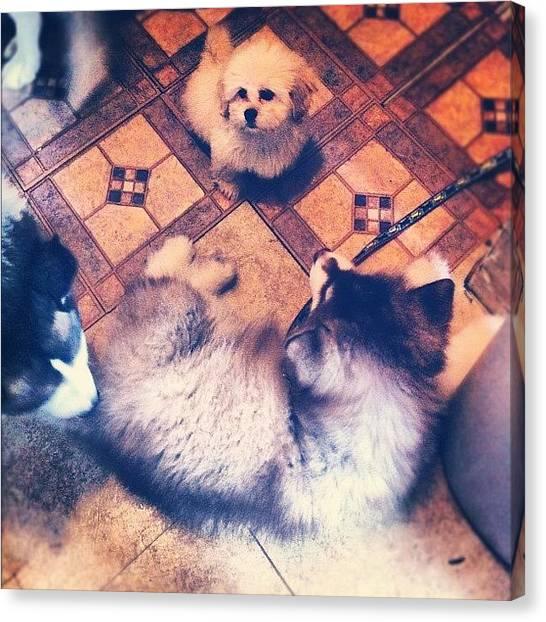 Huskies Canvas Print - #dog #reunion #alaskanmalamute by Tiffani Alvarez