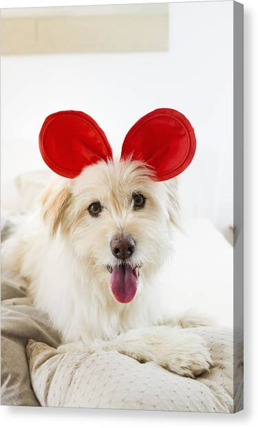 a6f4e005200 Dog Wearing Toy Ears On Bed Canvas Print