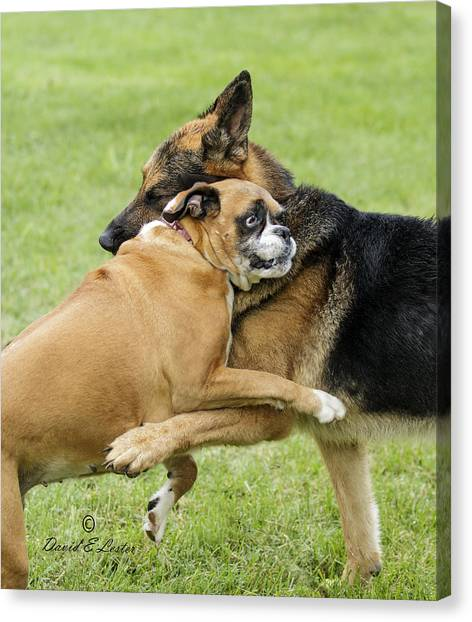 Doggie Love Canvas Print