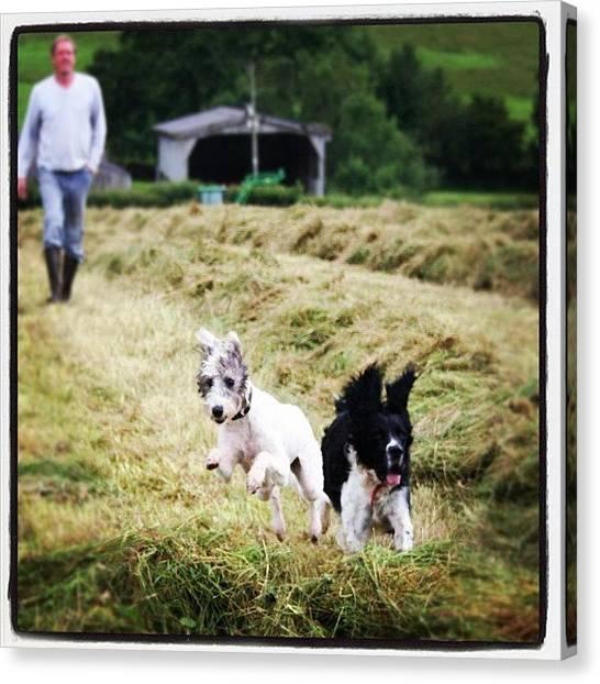 Farmers Canvas Print - #dogs #dogsofinstagram #dogoftheday by Fay Pead
