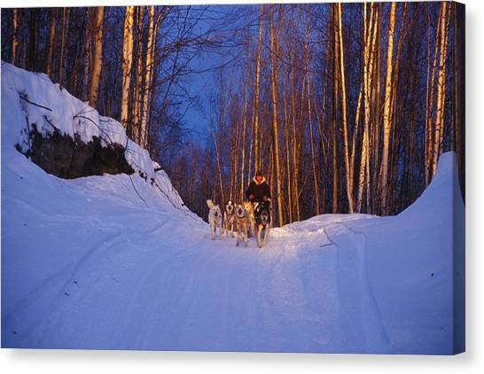 Sleds Canvas Print - Dogs Pull A Sled Over Snow by Nick Norman