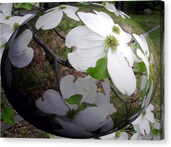 Dogwood Under Glass Canvas Print