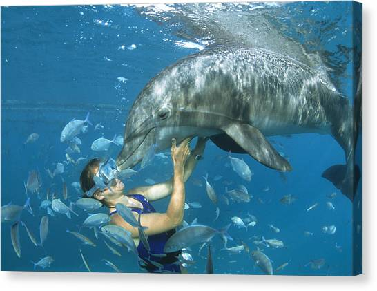 Bottlenose Dolphins Canvas Print - Dolphin And Swimmer by Alexis Rosenfeld
