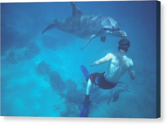 Snorkling Canvas Print - Dolphin And Swimmer by Chris Martin-bahr