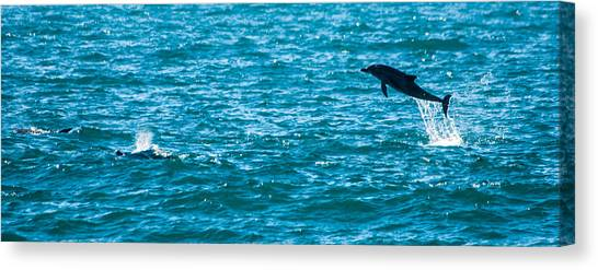 Bottlenose Dolphins Canvas Print - Dolphin Dance by Alistair Lyne