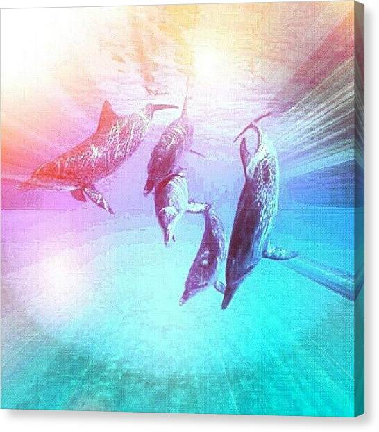 Dolphins Canvas Print - #dolphin #dolphins #sea #underwater by Ariel Muttaqin