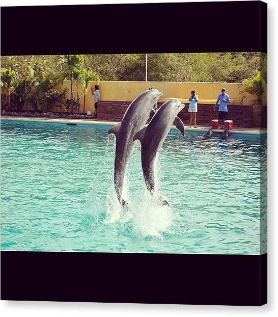 Dolphins Canvas Print - Dolphin Fun by Acacia Taylor
