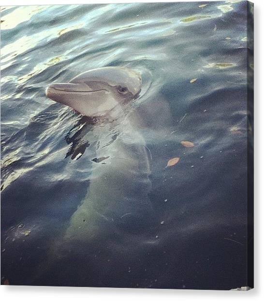 Innocent Canvas Print - #dolphin #keys #beautiful #ocean by Megan Petroski