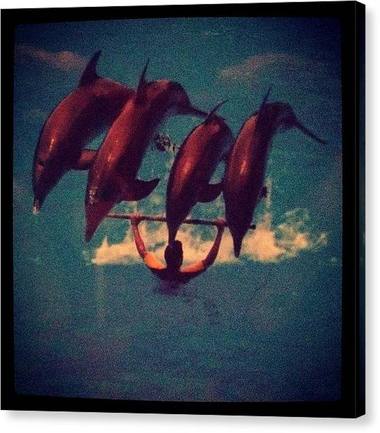 Wet Canvas Print - Dolphin Tricks by Rachel Williams