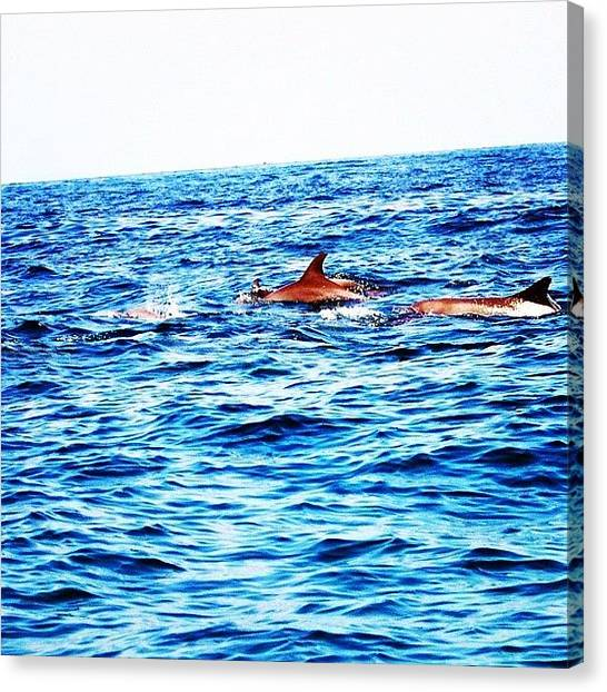 Ocean Animals Canvas Print - #dolphins #gmy #gang_family #jj #teg by Raffaele Salera