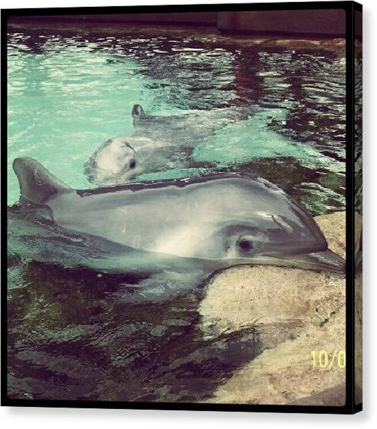 Dolphins Canvas Print - Dolphins by Lynda Larbi