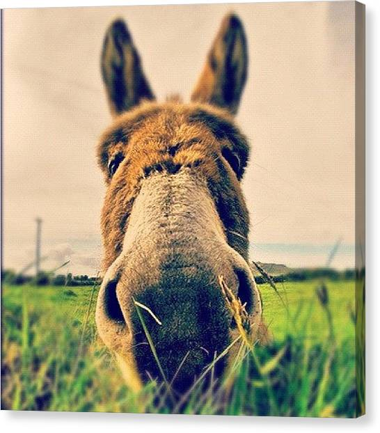 Donkeys Canvas Print - Donkey In Dingle, Co. Kerry, Ireland by Magda Nowacka