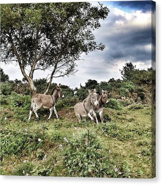 Donkeys Canvas Print - #donkeys #nature #natureporn #newforest by Niki Taylor