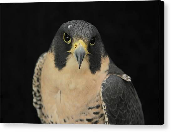 Don't Flinch... I Am Looking At You Canvas Print