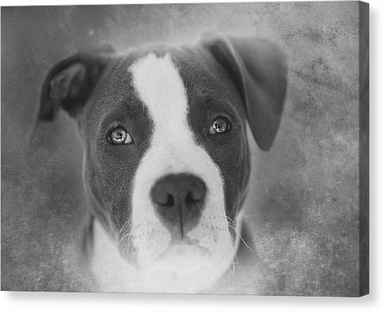 Pit Bull Canvas Print - Don't Hate The Breed - Black And White by Larry Marshall