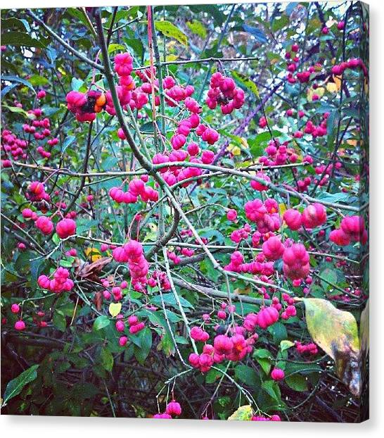 Fruit Trees Canvas Print - Dont Know What This But Find It In by Zoltan Toth