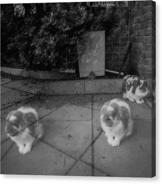 Rabbits Canvas Print - Double Exposure On #polaroid #fp100b by Andy Kleinmoedig