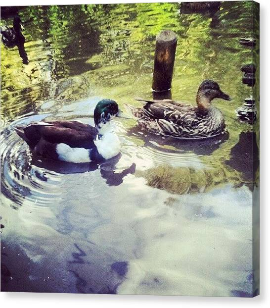 Biology Canvas Print - Double Tap To Watch Them Swim. #ducks by Jake Delmonte
