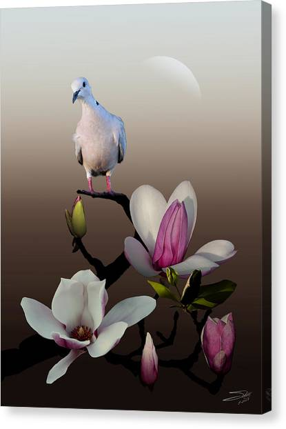 Dove And Magnolia Canvas Print