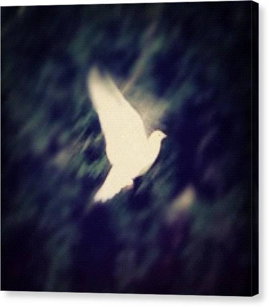 Dove Canvas Print - #dove #flight #bird #whitedove #peace by Nathan Clarke