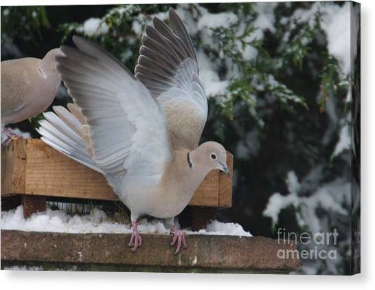 Dove On The Wing Canvas Print