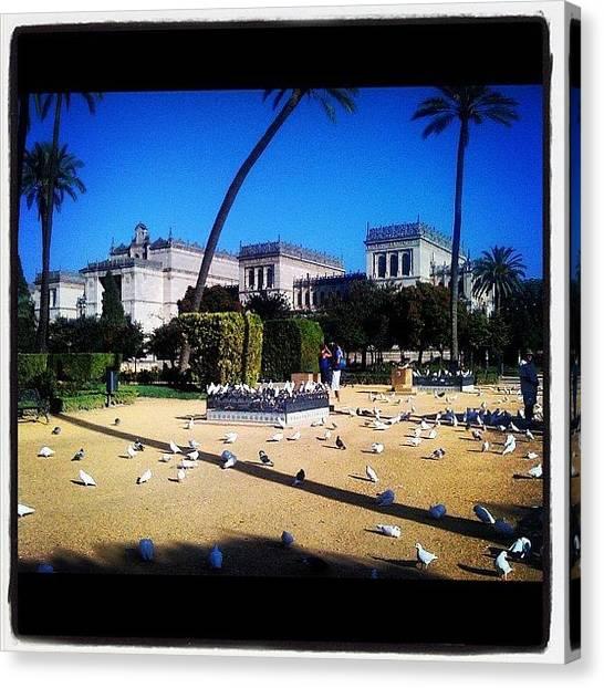 Dove Canvas Print - #doves #park #sevilha #spain #espana by Francisca Andrade